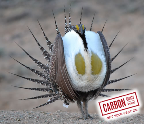 Wyoming Sage Grouse