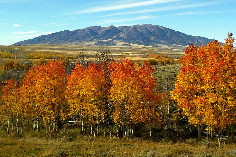 Elk Mountain In Fall