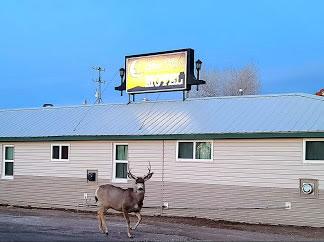 Silver Moon Motel & Suites & Deer