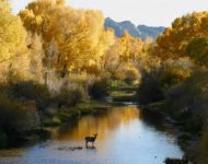 Wyoming Wildlife - Deer in Autumn